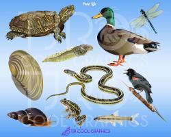 Tadpole clipart pond life