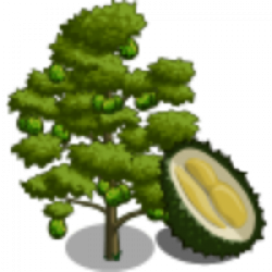 Durian clipart durian tree