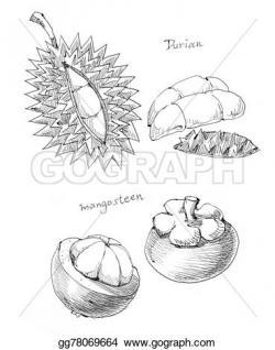 Durian clipart mangosteen