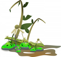 Plant clipart died