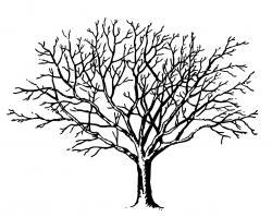 Barren clipart winter tree