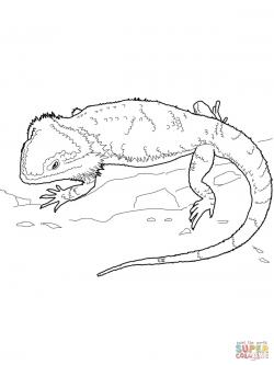 Eastern Water Dragon clipart