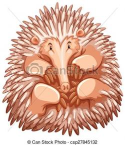 Echidna clipart cartoon