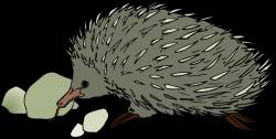 Hedgehog clipart echidna