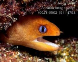 Eels clipart