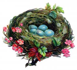 Bird's Nest clipart vintage