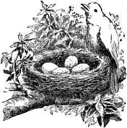 Nightingale clipart sparrow nest