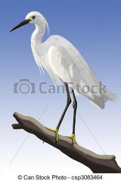 Egret clipart animal