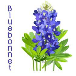 Hyacinth clipart bluebonnet