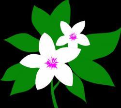 Jasmine clipart jasmine plant