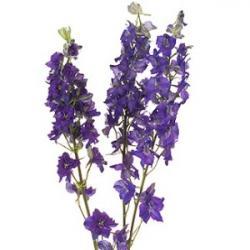 Hyacinth clipart larkspur