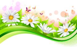Camomile clipart spring background