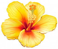 Exotic clipart hawaiian