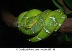 Smooth Green Snake clipart boa constrictor