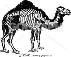 Engraving clipart animal skeleton