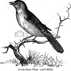 Nightingale clipart free bird
