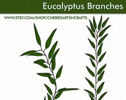 Herbs clipart eucalyptus leaves