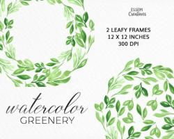 Eucalyptus clipart color frame