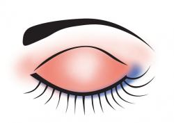 Eyelash clipart eyelid