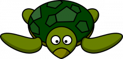 Turtoise clipart turtle face