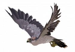 Kestrel clipart transparent