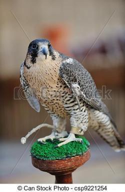 Falcon clipart arab