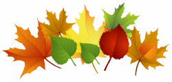 Festival clipart autumn leaf