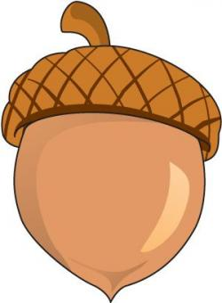 Colorful clipart acorn