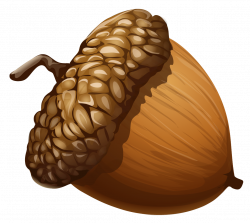 Acorn clipart transparent