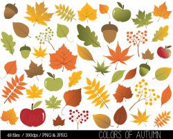 Maple Leaf clipart acorn