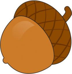 Acorn clipart animated
