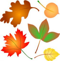 Leaves clipart colorful leave
