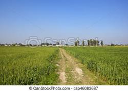 Farmland clipart wheat field