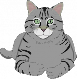 Tabby Cat clipart real cat