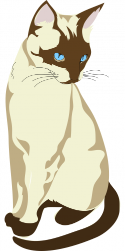 Siamese Cat clipart traditional