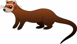 Weasel clipart cute cartoon