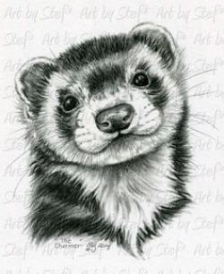 Drawn ferret realistic