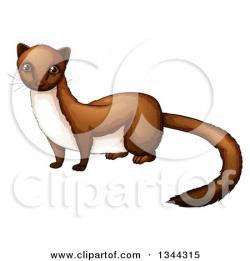 Weasel clipart mink