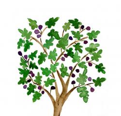 Fig clipart fig tree