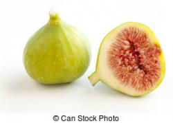 Fig clipart fresh