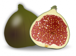 Fig clipart sliced