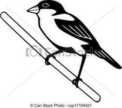 Finch clipart