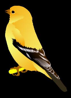 Goldfinch clipart finch