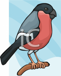 Finch clipart small bird