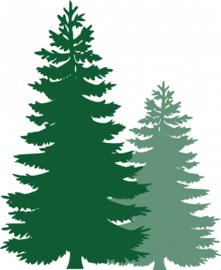 Pine Tree clipart