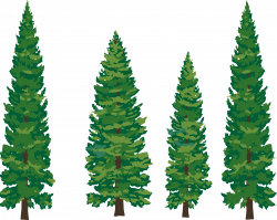 Wallpaper clipart pine tree