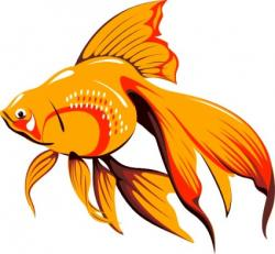 Fins clipart fish drawing