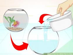 Betta clipart large water drop
