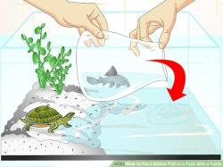 Fishtank clipart pet turtle