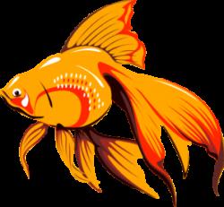 Fins clipart fish fin